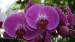 orchids_